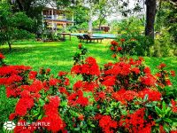 108-Ixora-flower-West-Indian-jasmine